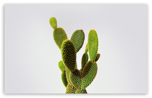 Cactus HD wallpaper for Wide 16:10 5:3 Widescreen WHXGA WQXGA WUXGA WXGA WGA ; HD 16:9 High Definition WQHD QWXGA 1080p 900p 720p QHD nHD ; Standard 4:3 5:4 3:2 Fullscreen UXGA XGA SVGA QSXGA SXGA DVGA HVGA HQVGA devices ( Apple PowerBook G4 iPhone 4 3G 3GS iPod Touch ) ; Tablet 1:1 ; iPad 1/2/Mini ; Mobile 4:3 5:3 3:2 16:9 5:4 - UXGA XGA SVGA WGA DVGA HVGA HQVGA devices ( Apple PowerBook G4 iPhone 4 3G 3GS iPod Touch ) WQHD QWXGA 1080p 900p 720p QHD nHD QSXGA SXGA ;