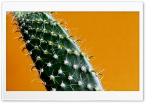 Cactus HD Wide Wallpaper for Widescreen