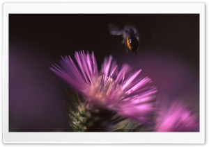 Cactus Flower And A Bee HD Wide Wallpaper for Widescreen