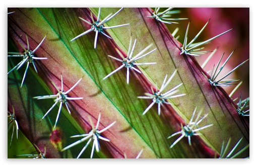 Cactus Thorns HD wallpaper for Wide 16:10 5:3 Widescreen WHXGA WQXGA WUXGA WXGA WGA ; HD 16:9 High Definition WQHD QWXGA 1080p 900p 720p QHD nHD ; UHD 16:9 WQHD QWXGA 1080p 900p 720p QHD nHD ; Standard 4:3 5:4 3:2 Fullscreen UXGA XGA SVGA QSXGA SXGA DVGA HVGA HQVGA devices ( Apple PowerBook G4 iPhone 4 3G 3GS iPod Touch ) ; Tablet 1:1 ; iPad 1/2/Mini ; Mobile 4:3 5:3 3:2 16:9 5:4 - UXGA XGA SVGA WGA DVGA HVGA HQVGA devices ( Apple PowerBook G4 iPhone 4 3G 3GS iPod Touch ) WQHD QWXGA 1080p 900p 720p QHD nHD QSXGA SXGA ;