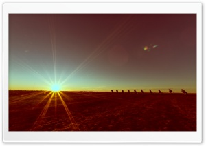 Cadillac Ranch HD Wide Wallpaper for Widescreen