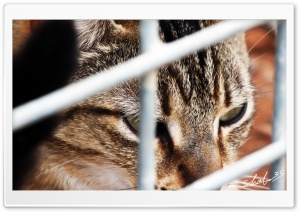Caged Cat HD Wide Wallpaper for Widescreen