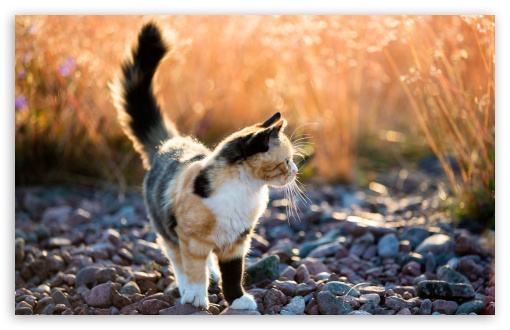 Calico Kitten Outside ❤ 4K UHD Wallpaper for Wide 16:10 5:3 Widescreen WHXGA WQXGA WUXGA WXGA WGA ; 4K UHD 16:9 Ultra High Definition 2160p 1440p 1080p 900p 720p ; UHD 16:9 2160p 1440p 1080p 900p 720p ; Standard 4:3 5:4 3:2 Fullscreen UXGA XGA SVGA QSXGA SXGA DVGA HVGA HQVGA ( Apple PowerBook G4 iPhone 4 3G 3GS iPod Touch ) ; Smartphone 5:3 WGA ; Tablet 1:1 ; iPad 1/2/Mini ; Mobile 4:3 5:3 3:2 16:9 5:4 - UXGA XGA SVGA WGA DVGA HVGA HQVGA ( Apple PowerBook G4 iPhone 4 3G 3GS iPod Touch ) 2160p 1440p 1080p 900p 720p QSXGA SXGA ;