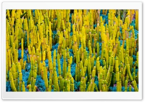 California Cactus Plants HD Wide Wallpaper for 4K UHD Widescreen desktop & smartphone