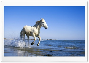 Camargue Horse HD Wide Wallpaper for 4K UHD Widescreen desktop & smartphone