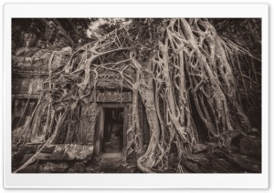 Cambodia Temple Tree Roots Ultra HD Wallpaper for 4K UHD Widescreen desktop, tablet & smartphone