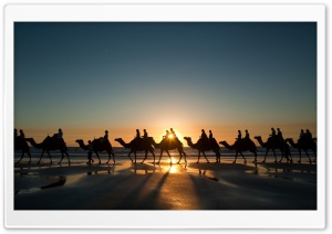 Camel Caravan HD Wide Wallpaper for Widescreen