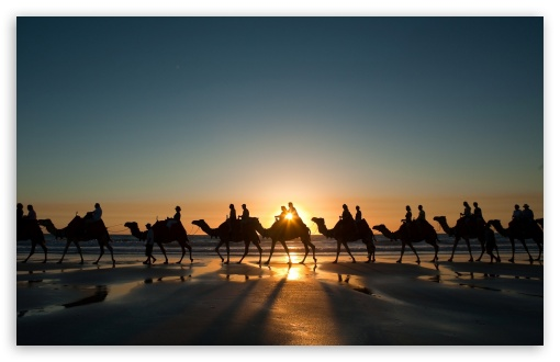 Camel Caravan HD wallpaper for Wide 16:10 5:3 Widescreen WHXGA WQXGA WUXGA WXGA WGA ; HD 16:9 High Definition WQHD QWXGA 1080p 900p 720p QHD nHD ; Standard 4:3 5:4 3:2 Fullscreen UXGA XGA SVGA QSXGA SXGA DVGA HVGA HQVGA devices ( Apple PowerBook G4 iPhone 4 3G 3GS iPod Touch ) ; Tablet 1:1 ; iPad 1/2/Mini ; Mobile 4:3 5:3 3:2 16:9 5:4 - UXGA XGA SVGA WGA DVGA HVGA HQVGA devices ( Apple PowerBook G4 iPhone 4 3G 3GS iPod Touch ) WQHD QWXGA 1080p 900p 720p QHD nHD QSXGA SXGA ;