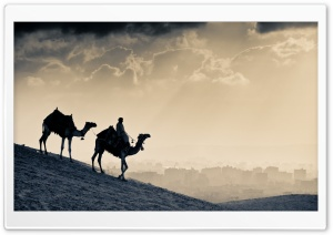Camels HD Wide Wallpaper for 4K UHD Widescreen desktop & smartphone