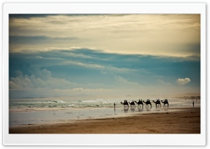 Camels On The Beach HD Wide Wallpaper for Widescreen