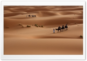 Camels Tour HD Wide Wallpaper for Widescreen
