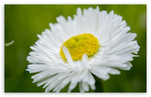 Camomile Macro HD wallpaper for Wide 16:10 5:3 Widescreen WHXGA WQXGA WUXGA WXGA WGA ; HD 16:9 High Definition WQHD QWXGA 1080p 900p 720p QHD nHD ; UHD 16:9 WQHD QWXGA 1080p 900p 720p QHD nHD ; Standard 4:3 5:4 3:2 Fullscreen UXGA XGA SVGA QSXGA SXGA DVGA HVGA HQVGA devices ( Apple PowerBook G4 iPhone 4 3G 3GS iPod Touch ) ; iPad 1/2/Mini ; Mobile 4:3 5:3 3:2 16:9 5:4 - UXGA XGA SVGA WGA DVGA HVGA HQVGA devices ( Apple PowerBook G4 iPhone 4 3G 3GS iPod Touch ) WQHD QWXGA 1080p 900p 720p QHD nHD QSXGA SXGA ;