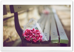 Carnations Bouquet On A Bench HD Wide Wallpaper for Widescreen