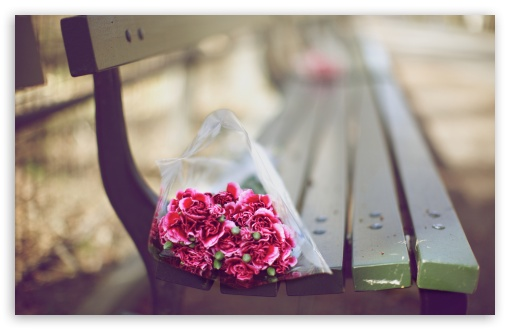 Carnations Bouquet On A Bench HD wallpaper for Wide 16:10 5:3 Widescreen WHXGA WQXGA WUXGA WXGA WGA ; HD 16:9 High Definition WQHD QWXGA 1080p 900p 720p QHD nHD ; UHD 16:9 WQHD QWXGA 1080p 900p 720p QHD nHD ; Standard 4:3 5:4 3:2 Fullscreen UXGA XGA SVGA QSXGA SXGA DVGA HVGA HQVGA devices ( Apple PowerBook G4 iPhone 4 3G 3GS iPod Touch ) ; Tablet 1:1 ; iPad 1/2/Mini ; Mobile 4:3 5:3 3:2 16:9 5:4 - UXGA XGA SVGA WGA DVGA HVGA HQVGA devices ( Apple PowerBook G4 iPhone 4 3G 3GS iPod Touch ) WQHD QWXGA 1080p 900p 720p QHD nHD QSXGA SXGA ; Dual 16:10 16:9 4:3 5:4 WHXGA WQXGA WUXGA WXGA WQHD QWXGA 1080p 900p 720p QHD nHD UXGA XGA SVGA QSXGA SXGA ;