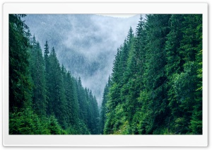 Carpathian Mountains Romania HD Wide Wallpaper for Widescreen