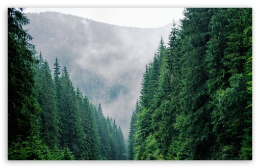 Carpathians Forest Romania HD wallpaper for Wide 16:10 5:3 Widescreen WHXGA WQXGA WUXGA WXGA WGA ; HD 16:9 High Definition WQHD QWXGA 1080p 900p 720p QHD nHD ; UHD 16:9 WQHD QWXGA 1080p 900p 720p QHD nHD ; Tablet 1:1 ; iPad 1/2/Mini ; Mobile 4:3 5:3 3:2 16:9 - UXGA XGA SVGA WGA DVGA HVGA HQVGA devices ( Apple PowerBook G4 iPhone 4 3G 3GS iPod Touch ) WQHD QWXGA 1080p 900p 720p QHD nHD ;