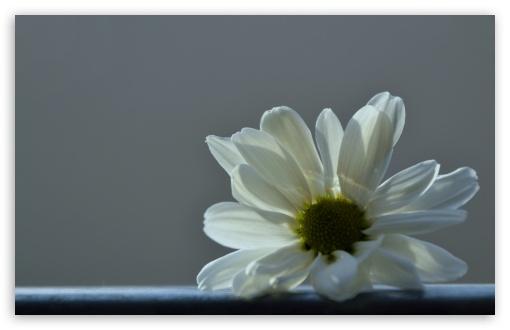 Cast Off ❤ 4K UHD Wallpaper for Wide 16:10 5:3 Widescreen WHXGA WQXGA WUXGA WXGA WGA ; 4K UHD 16:9 Ultra High Definition 2160p 1440p 1080p 900p 720p ; UHD 16:9 2160p 1440p 1080p 900p 720p ; Standard 4:3 5:4 3:2 Fullscreen UXGA XGA SVGA QSXGA SXGA DVGA HVGA HQVGA ( Apple PowerBook G4 iPhone 4 3G 3GS iPod Touch ) ; Tablet 1:1 ; iPad 1/2/Mini ; Mobile 4:3 5:3 3:2 16:9 5:4 - UXGA XGA SVGA WGA DVGA HVGA HQVGA ( Apple PowerBook G4 iPhone 4 3G 3GS iPod Touch ) 2160p 1440p 1080p 900p 720p QSXGA SXGA ;