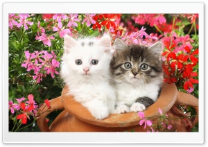 cat11 Ultra HD Wallpaper for 4K UHD Widescreen desktop, tablet & smartphone