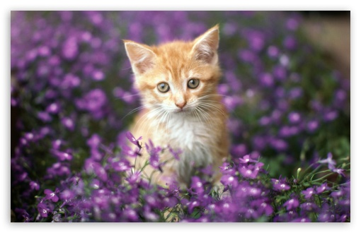 Cat 10 ❤ 4K UHD Wallpaper for Wide 16:10 5:3 Widescreen WHXGA WQXGA WUXGA WXGA WGA ; 4K UHD 16:9 Ultra High Definition 2160p 1440p 1080p 900p 720p ; Standard 4:3 5:4 3:2 Fullscreen UXGA XGA SVGA QSXGA SXGA DVGA HVGA HQVGA ( Apple PowerBook G4 iPhone 4 3G 3GS iPod Touch ) ; Tablet 1:1 ; iPad 1/2/Mini ; Mobile 4:3 5:3 3:2 16:9 5:4 - UXGA XGA SVGA WGA DVGA HVGA HQVGA ( Apple PowerBook G4 iPhone 4 3G 3GS iPod Touch ) 2160p 1440p 1080p 900p 720p QSXGA SXGA ;