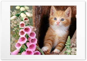 Cat 7 Ultra HD Wallpaper for 4K UHD Widescreen desktop, tablet & smartphone