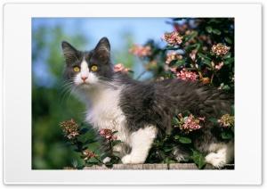 Cat 2 Ultra HD Wallpaper for 4K UHD Widescreen desktop, tablet & smartphone