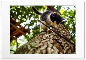 cat Ultra HD Wallpaper for 4K UHD Widescreen desktop, tablet & smartphone