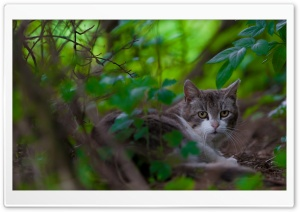 Cat 6 HD Wide Wallpaper for Widescreen