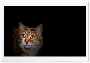 Cat Amazed HD Wide Wallpaper for 4K UHD Widescreen desktop & smartphone