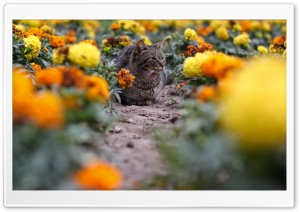 Cat Among The Flowers HD Wide Wallpaper for Widescreen