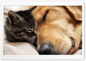 Cat And Dog Friendship HD Wide Wallpaper for 4K UHD Widescreen desktop & smartphone