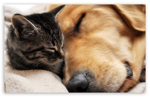 Cat And Dog Friendship HD wallpaper for Wide 16:10 5:3 Widescreen WHXGA WQXGA WUXGA WXGA WGA ; HD 16:9 High Definition WQHD QWXGA 1080p 900p 720p QHD nHD ; Standard 4:3 5:4 3:2 Fullscreen UXGA XGA SVGA QSXGA SXGA DVGA HVGA HQVGA devices ( Apple PowerBook G4 iPhone 4 3G 3GS iPod Touch ) ; Tablet 1:1 ; iPad 1/2/Mini ; Mobile 4:3 5:3 3:2 16:9 5:4 - UXGA XGA SVGA WGA DVGA HVGA HQVGA devices ( Apple PowerBook G4 iPhone 4 3G 3GS iPod Touch ) WQHD QWXGA 1080p 900p 720p QHD nHD QSXGA SXGA ;