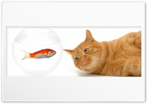Cat And Fish HD Wide Wallpaper for Widescreen