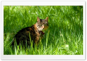 Cat And Grass HD Wide Wallpaper for Widescreen