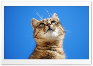Cat, Blue Sky HD Wide Wallpaper for Widescreen