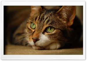 Cat Dreaming Ultra HD Wallpaper for 4K UHD Widescreen desktop, tablet & smartphone