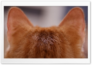 Cat Ears Ultra HD Wallpaper for 4K UHD Widescreen desktop, tablet & smartphone