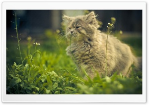 Cat Eating Grass HD Wide Wallpaper for Widescreen
