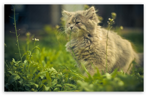 Cat Eating Grass HD wallpaper for Wide 16:10 5:3 Widescreen WHXGA WQXGA WUXGA WXGA WGA ; HD 16:9 High Definition WQHD QWXGA 1080p 900p 720p QHD nHD ; Standard 4:3 5:4 3:2 Fullscreen UXGA XGA SVGA QSXGA SXGA DVGA HVGA HQVGA devices ( Apple PowerBook G4 iPhone 4 3G 3GS iPod Touch ) ; Tablet 1:1 ; iPad 1/2/Mini ; Mobile 4:3 5:3 3:2 16:9 5:4 - UXGA XGA SVGA WGA DVGA HVGA HQVGA devices ( Apple PowerBook G4 iPhone 4 3G 3GS iPod Touch ) WQHD QWXGA 1080p 900p 720p QHD nHD QSXGA SXGA ;