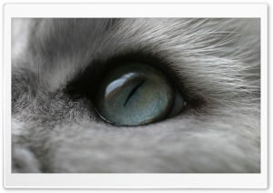 Cat Eye HD Wide Wallpaper for Widescreen