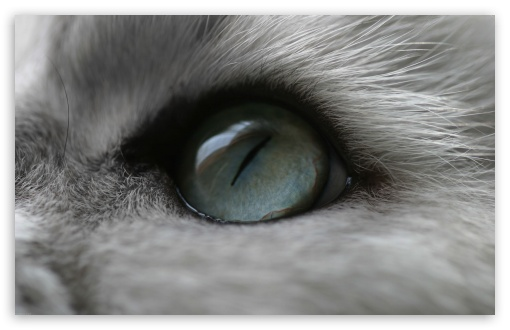 Cat Eye ❤ 4K UHD Wallpaper for Wide 16:10 5:3 Widescreen WHXGA WQXGA WUXGA WXGA WGA ; 4K UHD 16:9 Ultra High Definition 2160p 1440p 1080p 900p 720p ; Standard 4:3 5:4 3:2 Fullscreen UXGA XGA SVGA QSXGA SXGA DVGA HVGA HQVGA ( Apple PowerBook G4 iPhone 4 3G 3GS iPod Touch ) ; Tablet 1:1 ; iPad 1/2/Mini ; Mobile 4:3 5:3 3:2 16:9 5:4 - UXGA XGA SVGA WGA DVGA HVGA HQVGA ( Apple PowerBook G4 iPhone 4 3G 3GS iPod Touch ) 2160p 1440p 1080p 900p 720p QSXGA SXGA ;