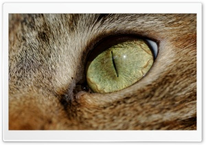 Cat Eye Macro HD Wide Wallpaper for Widescreen