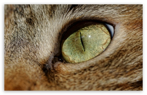 Cat Eye Macro HD wallpaper for Wide 16:10 5:3 Widescreen WHXGA WQXGA WUXGA WXGA WGA ; HD 16:9 High Definition WQHD QWXGA 1080p 900p 720p QHD nHD ; Standard 4:3 3:2 Fullscreen UXGA XGA SVGA DVGA HVGA HQVGA devices ( Apple PowerBook G4 iPhone 4 3G 3GS iPod Touch ) ; iPad 1/2/Mini ; Mobile 4:3 5:3 3:2 16:9 - UXGA XGA SVGA WGA DVGA HVGA HQVGA devices ( Apple PowerBook G4 iPhone 4 3G 3GS iPod Touch ) WQHD QWXGA 1080p 900p 720p QHD nHD ;