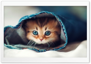 Cat Hqih HD Wide Wallpaper for Widescreen