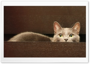 Cat In A Drawer HD Wide Wallpaper for 4K UHD Widescreen desktop & smartphone