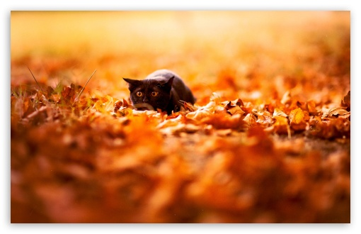 Cat In Ambush ❤ 4K UHD Wallpaper for Wide 16:10 5:3 Widescreen WHXGA WQXGA WUXGA WXGA WGA ; 4K UHD 16:9 Ultra High Definition 2160p 1440p 1080p 900p 720p ; Standard 4:3 5:4 3:2 Fullscreen UXGA XGA SVGA QSXGA SXGA DVGA HVGA HQVGA ( Apple PowerBook G4 iPhone 4 3G 3GS iPod Touch ) ; Tablet 1:1 ; iPad 1/2/Mini ; Mobile 4:3 5:3 3:2 16:9 5:4 - UXGA XGA SVGA WGA DVGA HVGA HQVGA ( Apple PowerBook G4 iPhone 4 3G 3GS iPod Touch ) 2160p 1440p 1080p 900p 720p QSXGA SXGA ;