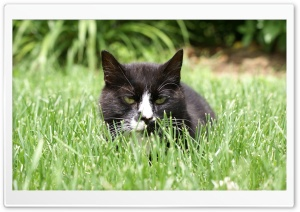 Cat in Grass HD Wide Wallpaper for Widescreen
