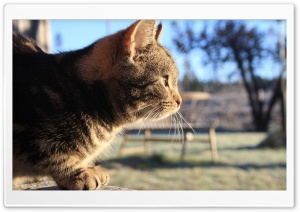 Cat In The Sunlight HD Wide Wallpaper for Widescreen