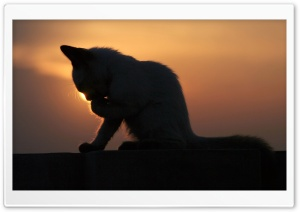 Cat In The Sunset HD Wide Wallpaper for Widescreen