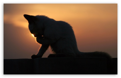 Cat In The Sunset HD wallpaper for Wide 16:10 5:3 Widescreen WHXGA WQXGA WUXGA WXGA WGA ; HD 16:9 High Definition WQHD QWXGA 1080p 900p 720p QHD nHD ; Standard 4:3 5:4 3:2 Fullscreen UXGA XGA SVGA QSXGA SXGA DVGA HVGA HQVGA devices ( Apple PowerBook G4 iPhone 4 3G 3GS iPod Touch ) ; iPad 1/2/Mini ; Mobile 4:3 5:3 3:2 16:9 5:4 - UXGA XGA SVGA WGA DVGA HVGA HQVGA devices ( Apple PowerBook G4 iPhone 4 3G 3GS iPod Touch ) WQHD QWXGA 1080p 900p 720p QHD nHD QSXGA SXGA ;