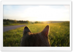 Cat Looking at Sunrise HD Wide Wallpaper for Widescreen